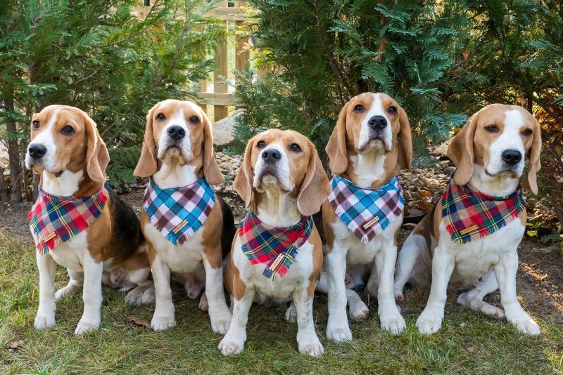 Čo jedia psí šampióni z Malých Karpát?
