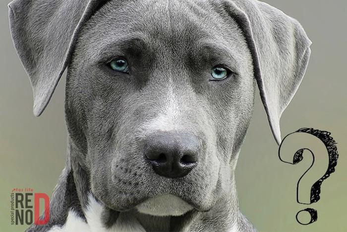 Ktoré plemeno psa je u nás najobľúbenejšie?