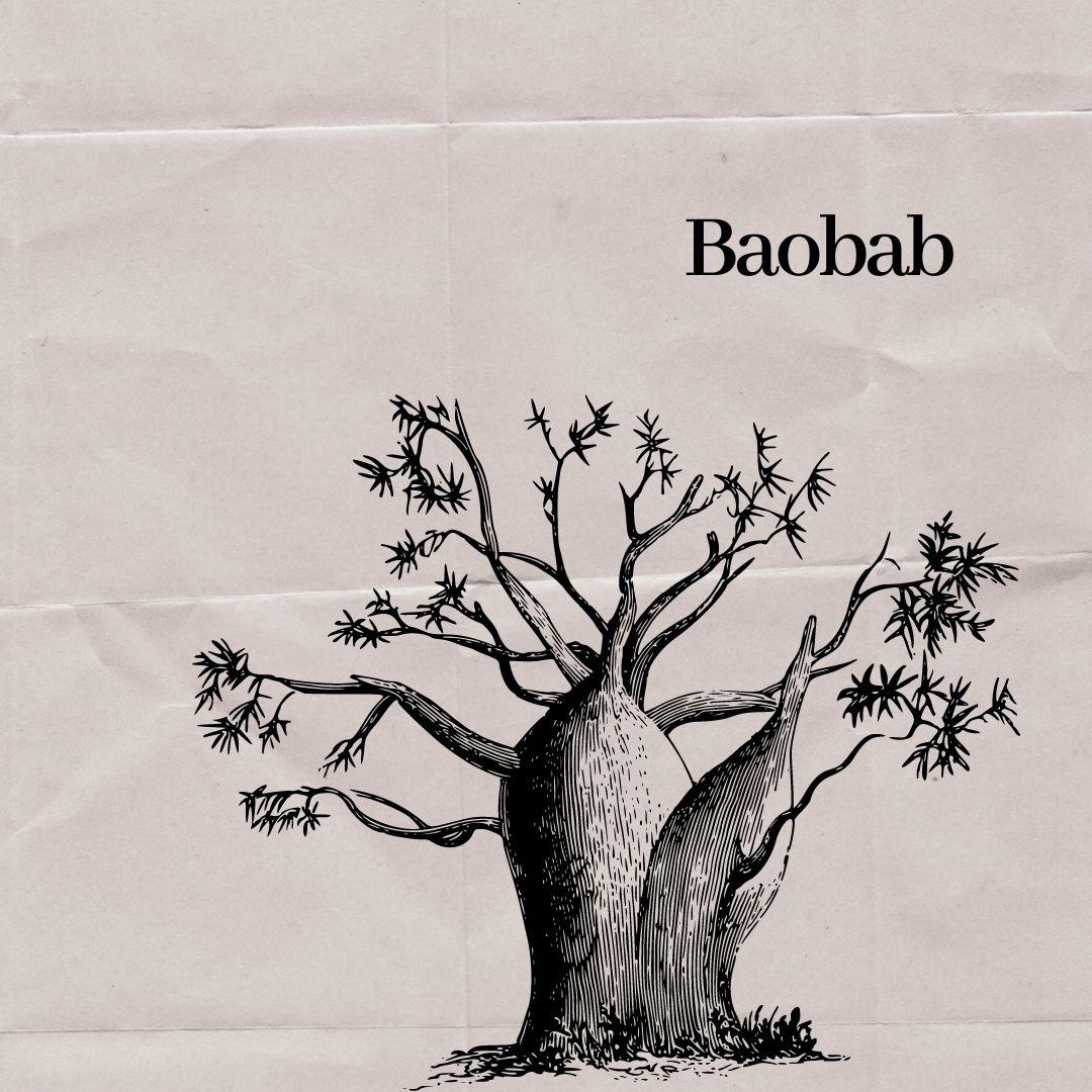 Hubnoucí strom, který roste hlavou dolů…