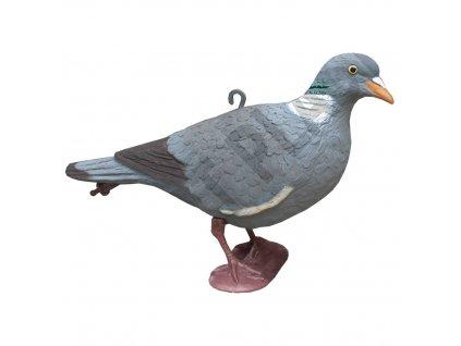 Balabán holub - stojící, hlava nahoře
