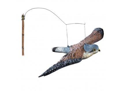 Balabán poštolka létající
