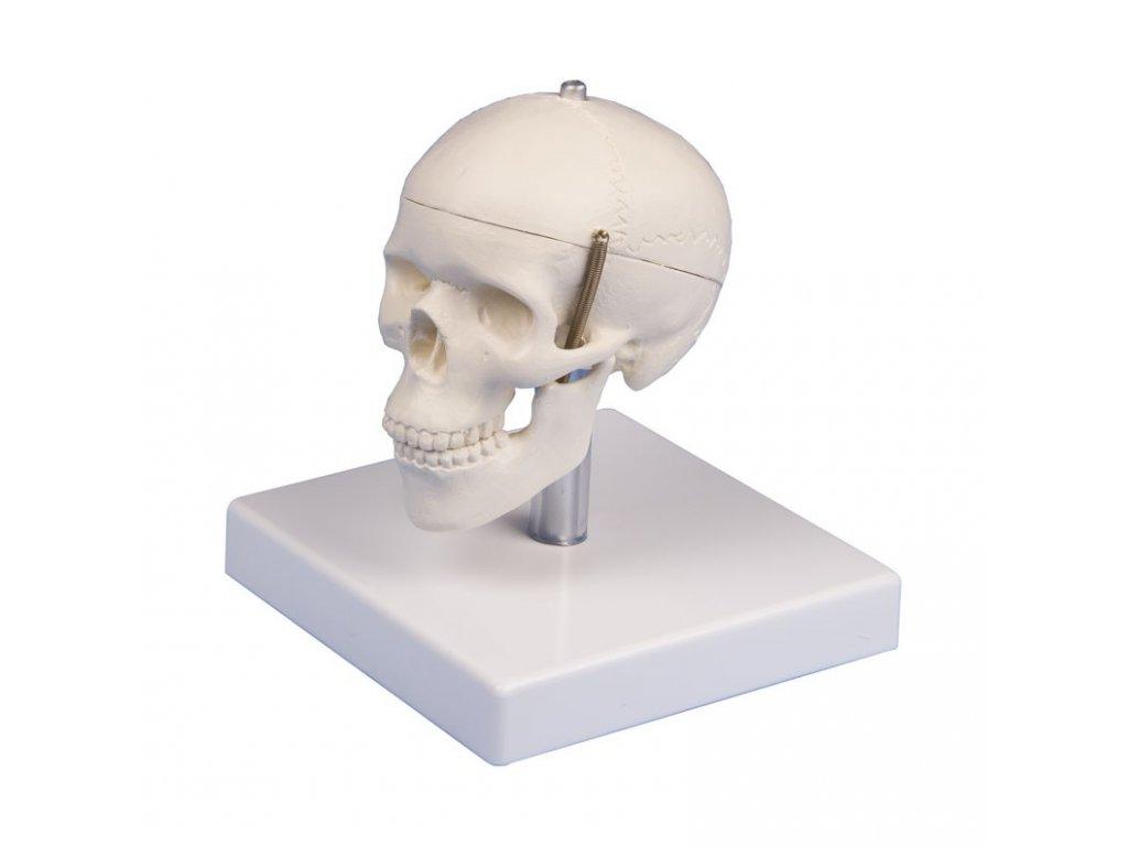 Model lebky - miniaturní