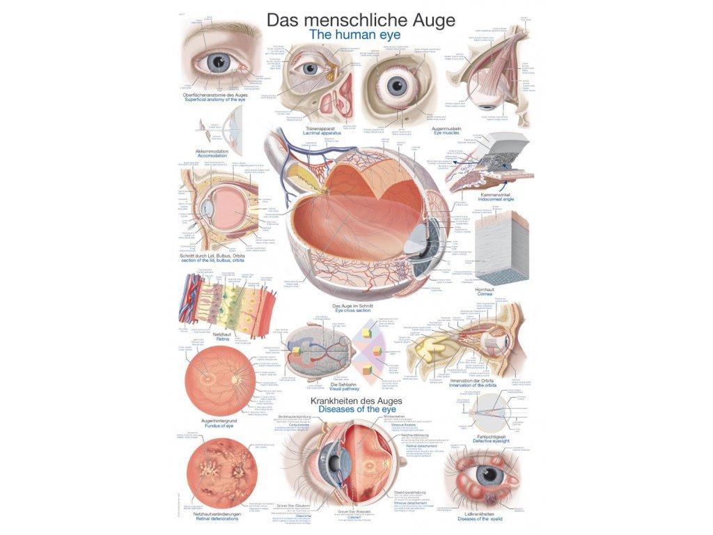 Plakát - lidské oko 70x100 cm