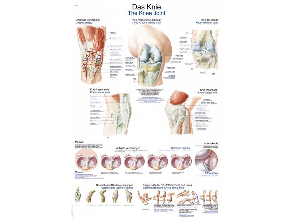 Plakát - koleno 70x100 cm