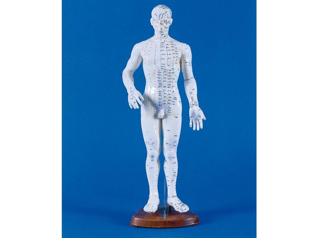 Čínská akupunktura - mužská postava