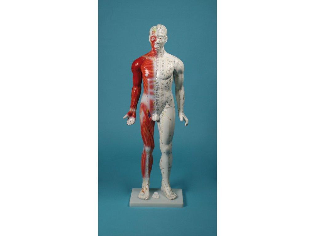 Čínská akupunktura - postava 80 cm