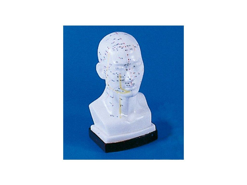 Čínská akupunktura - hlava
