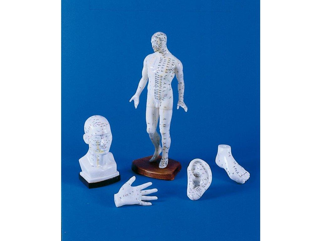 Čínská akupunktura set - 5 modelů