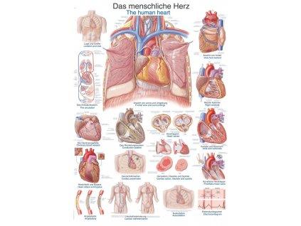 Plakát - lidské srdce 70x100 cm