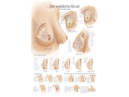 Plakát - ženský prs 70x100 cm