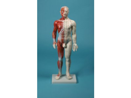 Čínská akupunktura - postava 60 cm
