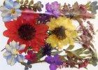 Sušené květiny a listy