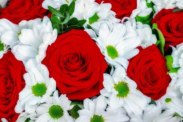 roses-4030133_640