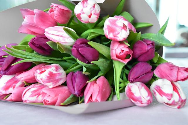 tulips-4927683_640