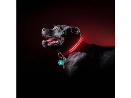 Svítící obojek - červený L