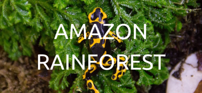 Zasadili jsme 100 stromů v Amazonském pralese