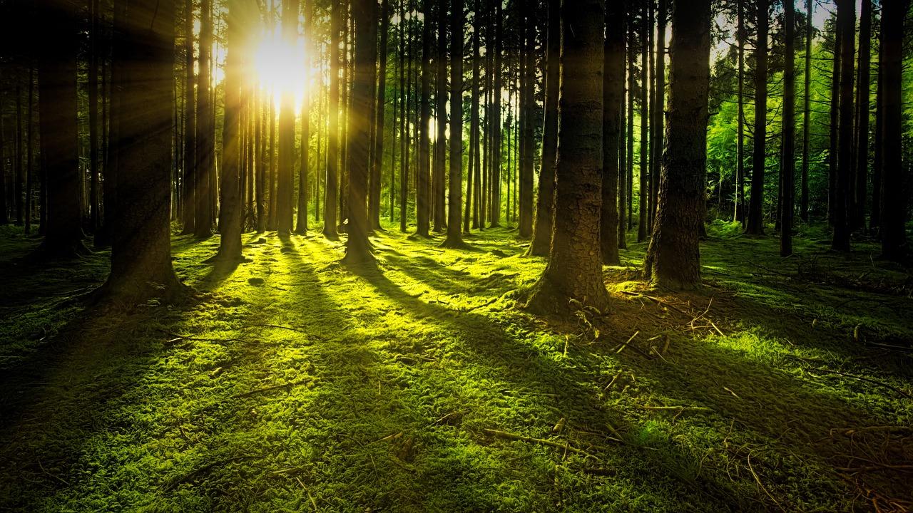 Vysazení bilionu stromů jako řešení klimatické krize