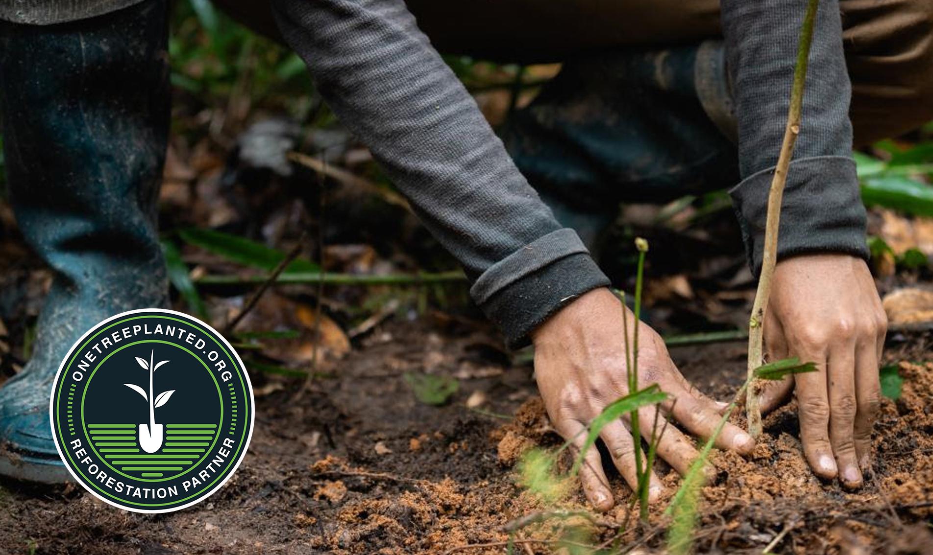 Jak pomoci Amazonskému deštnému pralesu