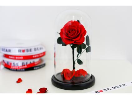 Věčná červená růže ve skle