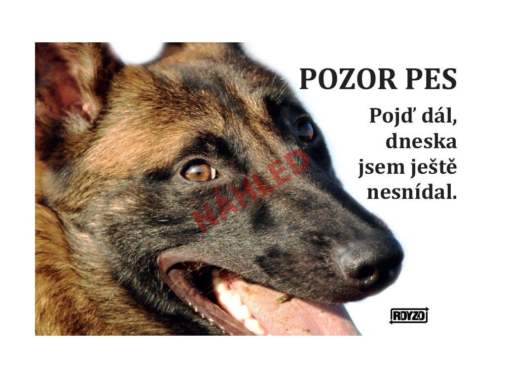 Výstražná vtipná cedule pozor pes - psí plemeno Belgický ovčák