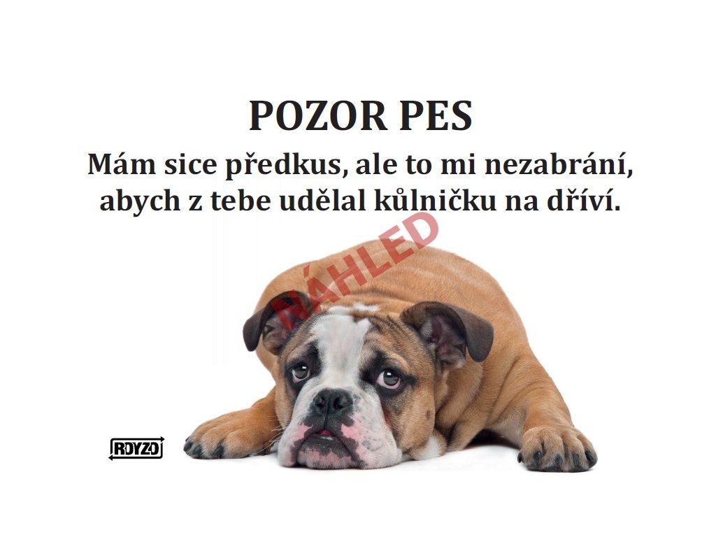 Výstražná vtipná cedule pozor pes - psí plemeno Anglický buldok