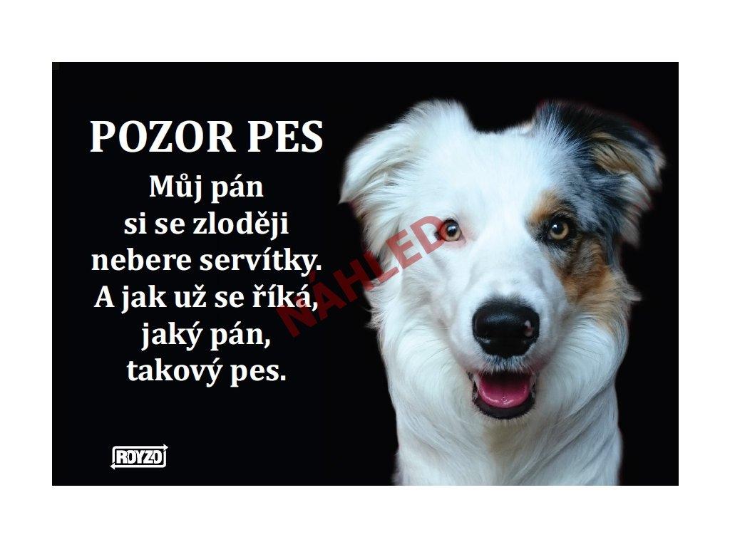 Výstražná vtipná samolepící cedule pozor pes - psí plemeno Border kolie tricolour