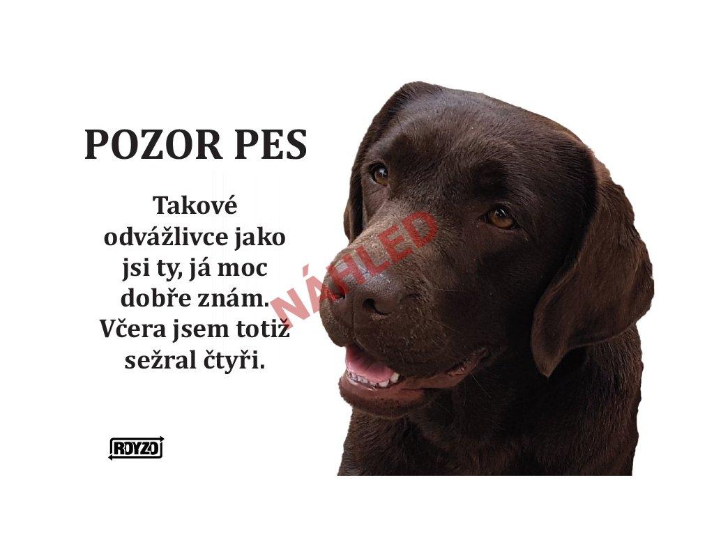 Výstražná vtipná cedule pozor pes - psí plemeno Labradorský retrívr hnědý
