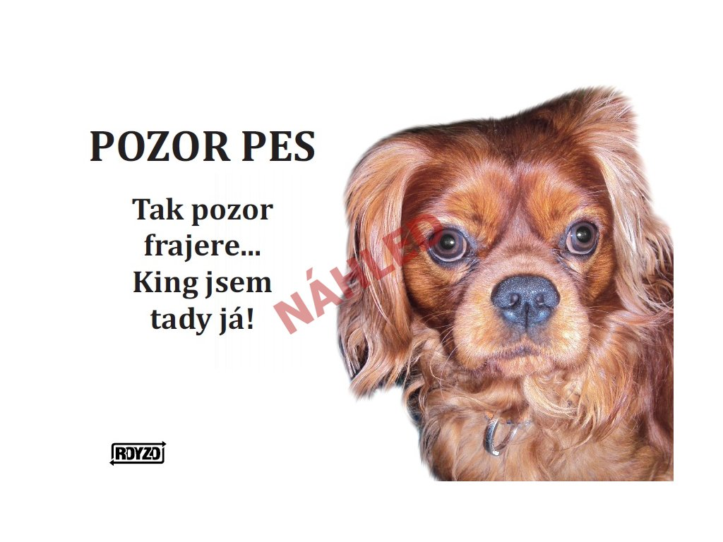 Výstražná vtipná samolepící cedule pozor pes - psí plemeno Kavalír King Charles španěl ruby