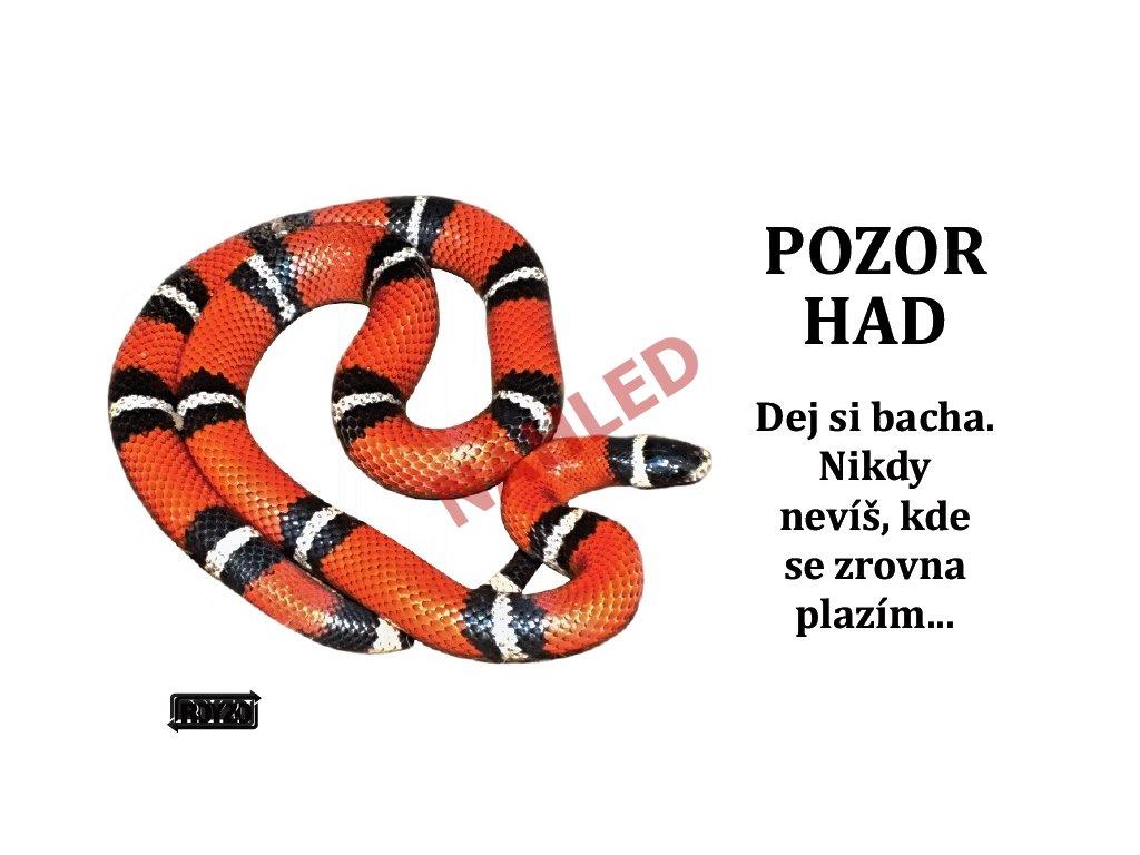 Výstražná vtipná cedule pozor had - Korálovka sedlatá