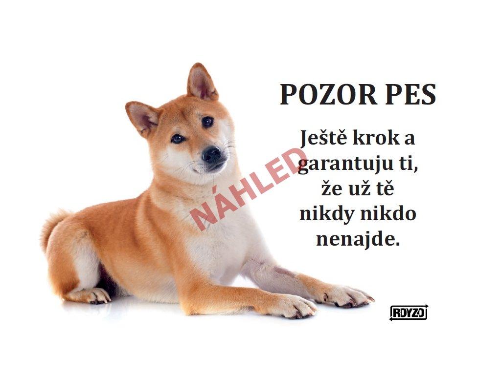 Výstražná vtipná cedule pozor pes - psí plemeno Shiba-Inu