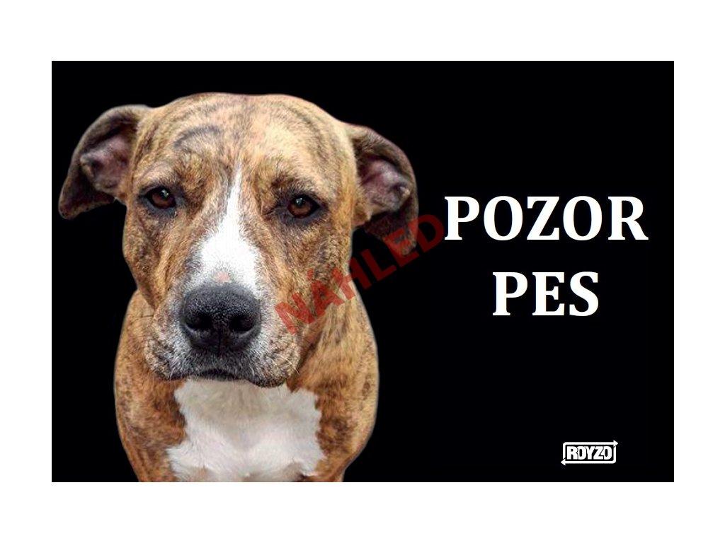 Výstražná vtipná cedule pozor pes na černém pozadí - psí plemeno Pitbull X Stafford