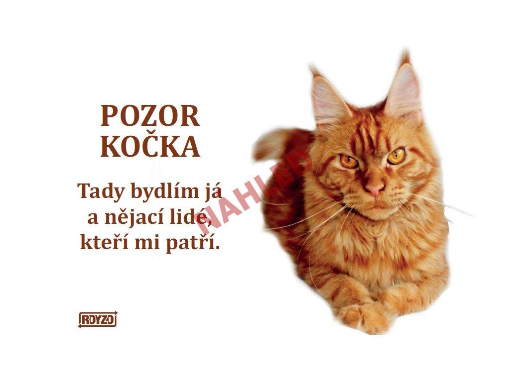 Výstražná vtipná cedule pozor kočka - Mainská mývalí kočka červená