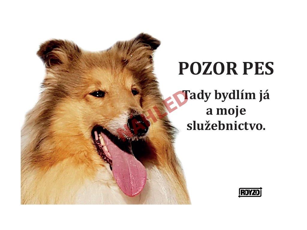 Výstražná vtipná samolepící cedule pozor pes - psí plemeno Kolie dlouhosrstá zlatá