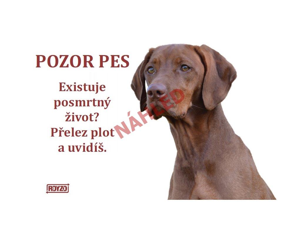 Výstražná vtipná samolepící cedule pozor pes - psí plemeno Maďarský ohař 1