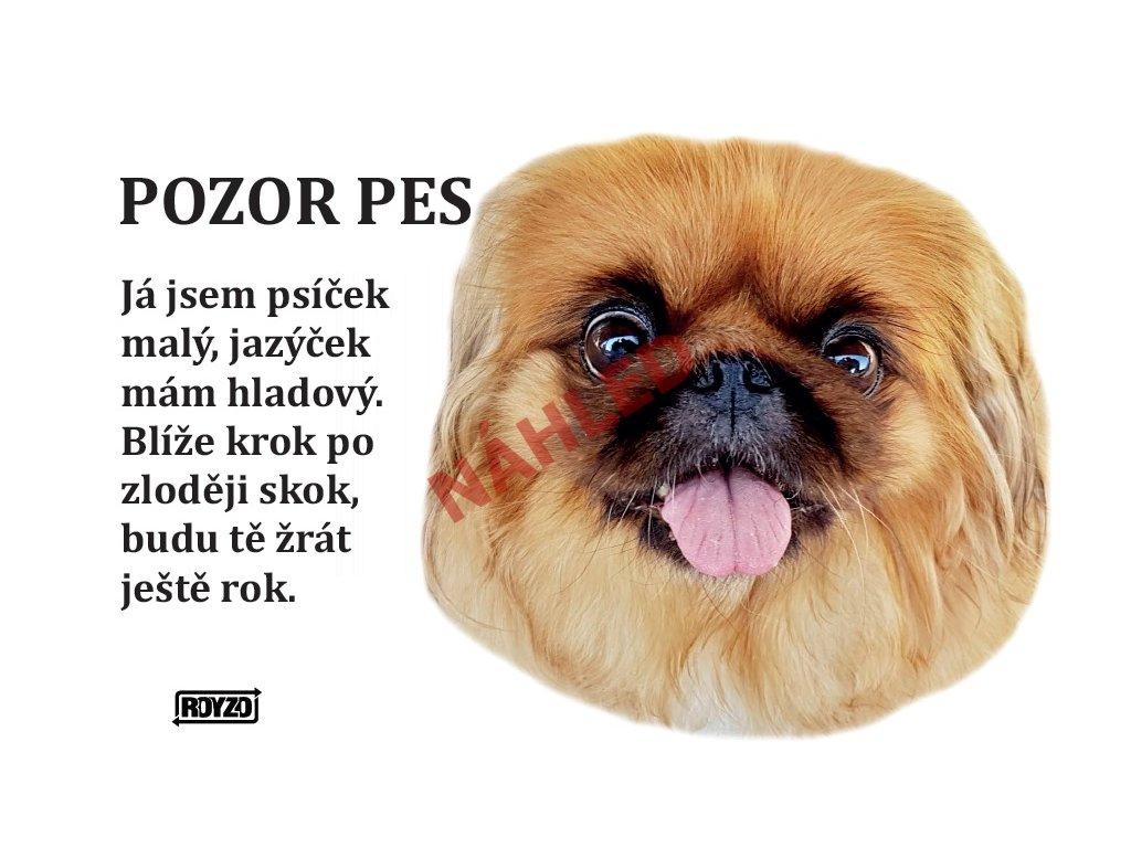 Výstražná vtipná samolepící cedule pozor pes - psí plemeno Pekingský palácový psík