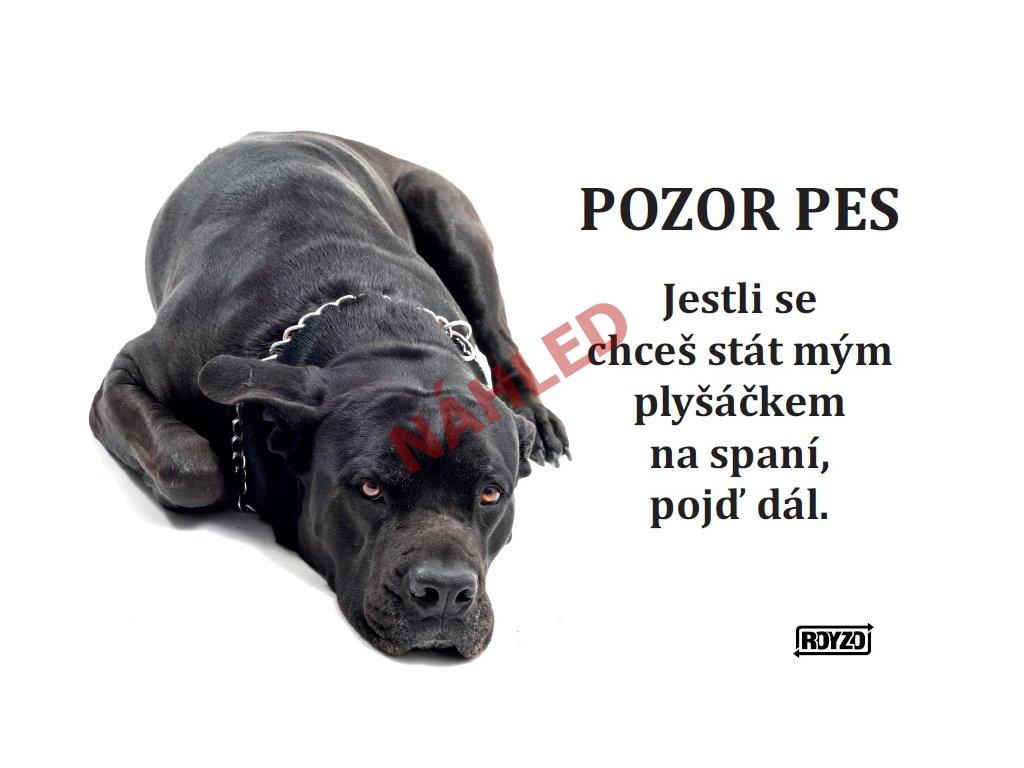 Výstražná vtipná cedule pozor pes - psí plemeno Cane corso
