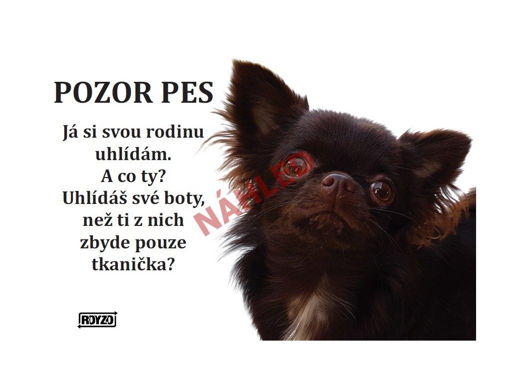Výstražná vtipná cedule pozor pes - psí plemeno Čivava dlouhosrstá hnědá