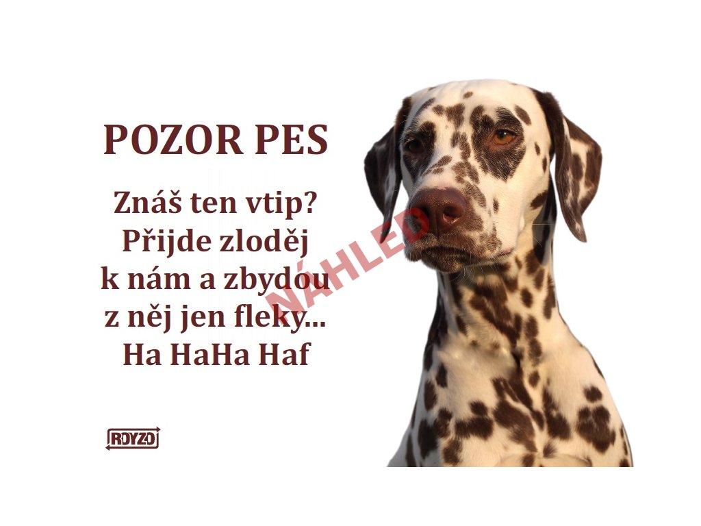 Výstražná vtipná cedule pozor pes - psí plemeno Dalmatin
