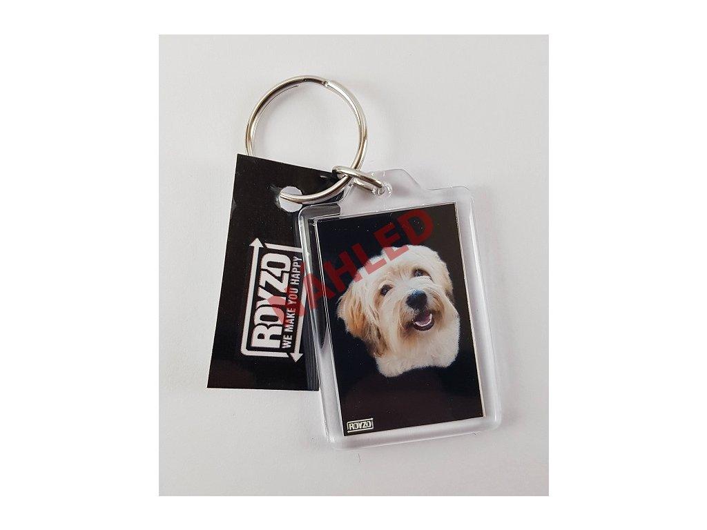 Klíčenka - Havanský psík sobolí s bílou