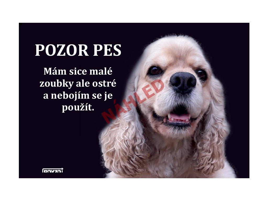 Výstražná vtipná samolepící cedule pozor pes - psí plemeno Americký kokršpaněl světle hnědý