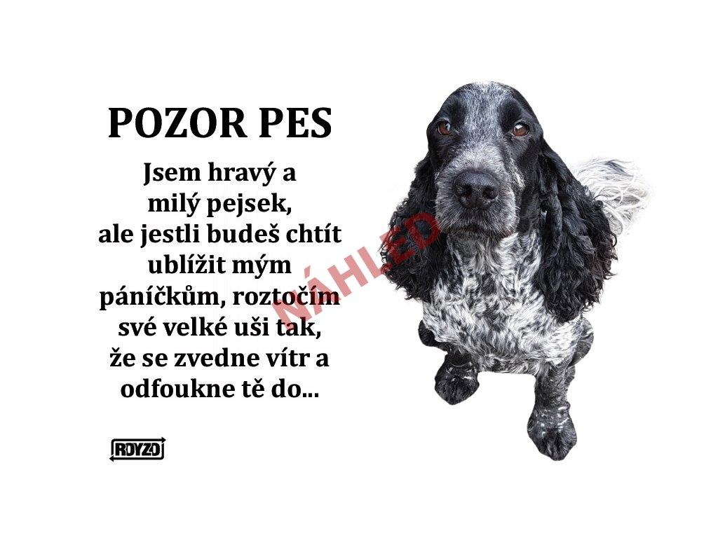 Výstražná vtipná samolepící cedule pozor pes - psí plemeno Anglický kokršpaněl modrý bělouš