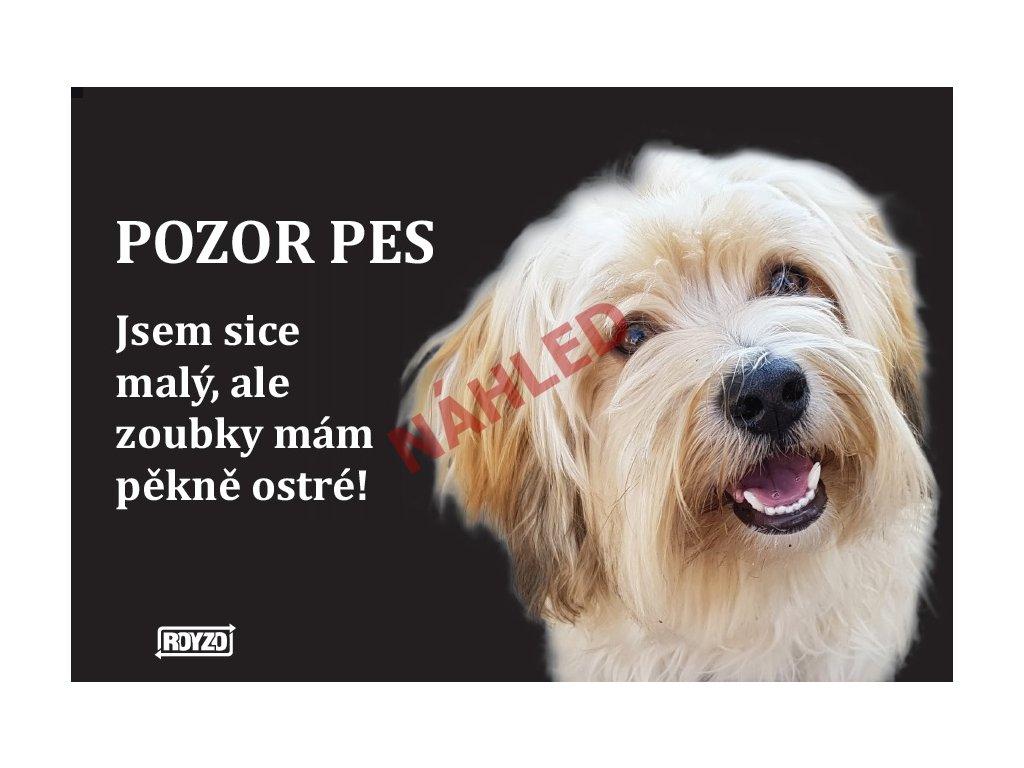 Výstražná vtipná samolepící cedule pozor pes - psí plemeno Havanský psík sobolí s bílou