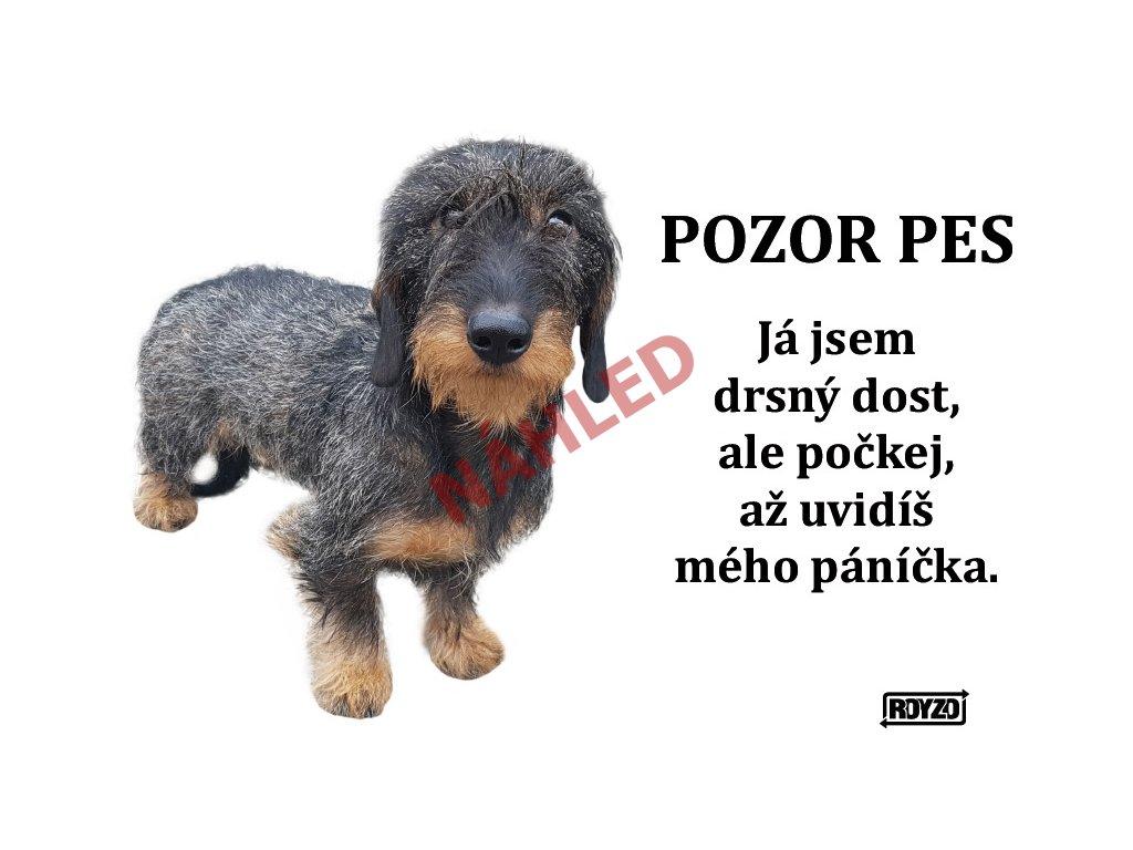 Výstražná vtipná samolepící cedule pozor pes - psí plemeno Jezevčík drsnosrstý