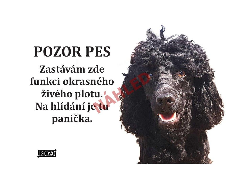 Výstražná vtipná samolepící cedule pozor pes - psí plemeno Pudl trpasličí černý