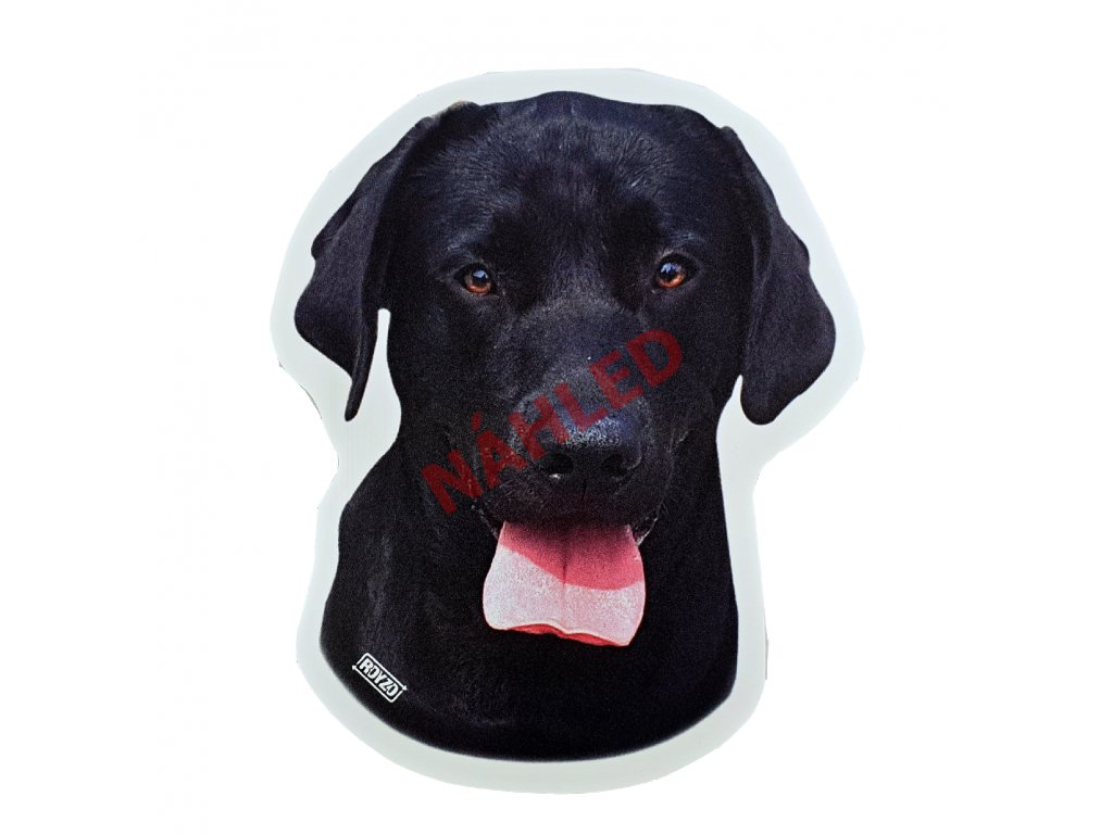 Labradorský retrívr černý
