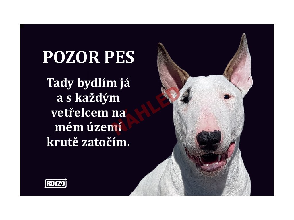 Výstražná vtipná cedule pozor pes - psí plemeno Bulteriér bílý