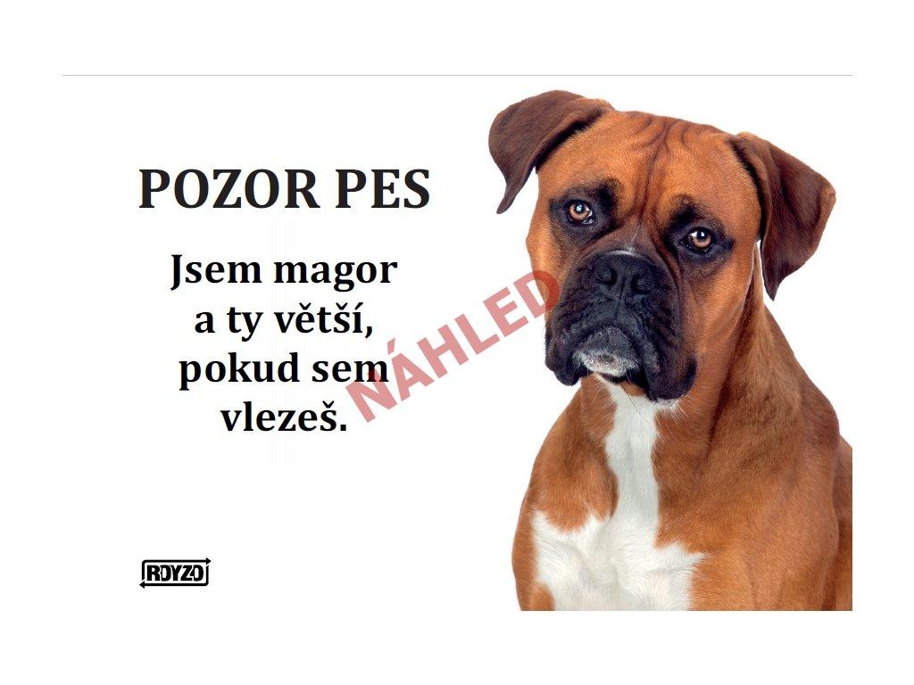 Výstražná vtipná samolepící cedule pozor pes - psí plemeno Německý boxer zlatý