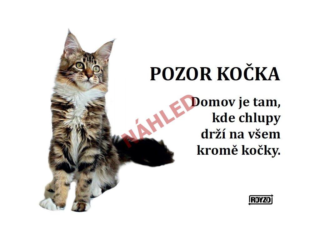 Výstražná vtipná samolepící cedule pozor kočka - Mainská mývalí kočka mramorovaná s bílým