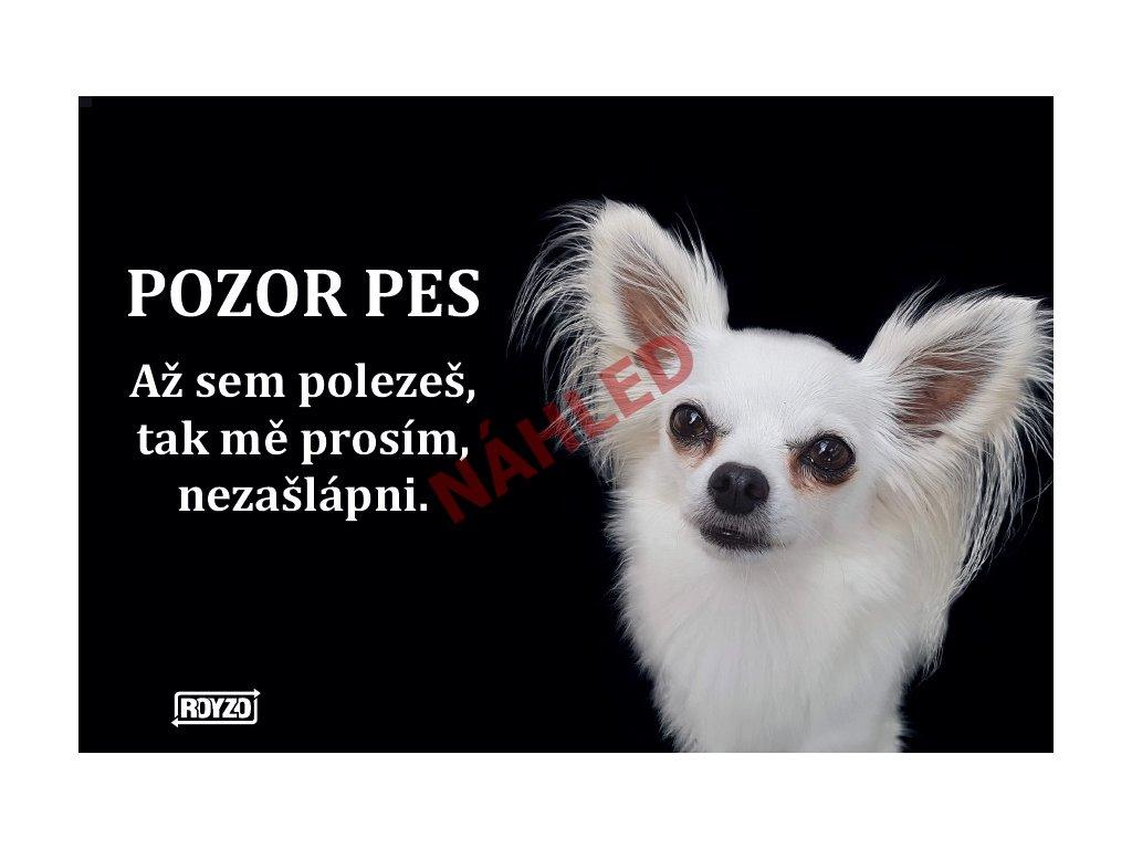Výstražná vtipná cedule pozor pes - Čivava dlouhosrstá bílá