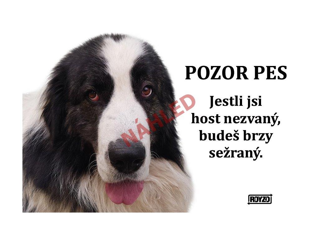 Výstražná vtipná samolepící cedule pozor pes - psí plemeno Pyrenejský mastin